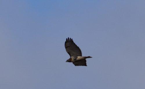 Hudson River Ramble Hawk Migration Hike