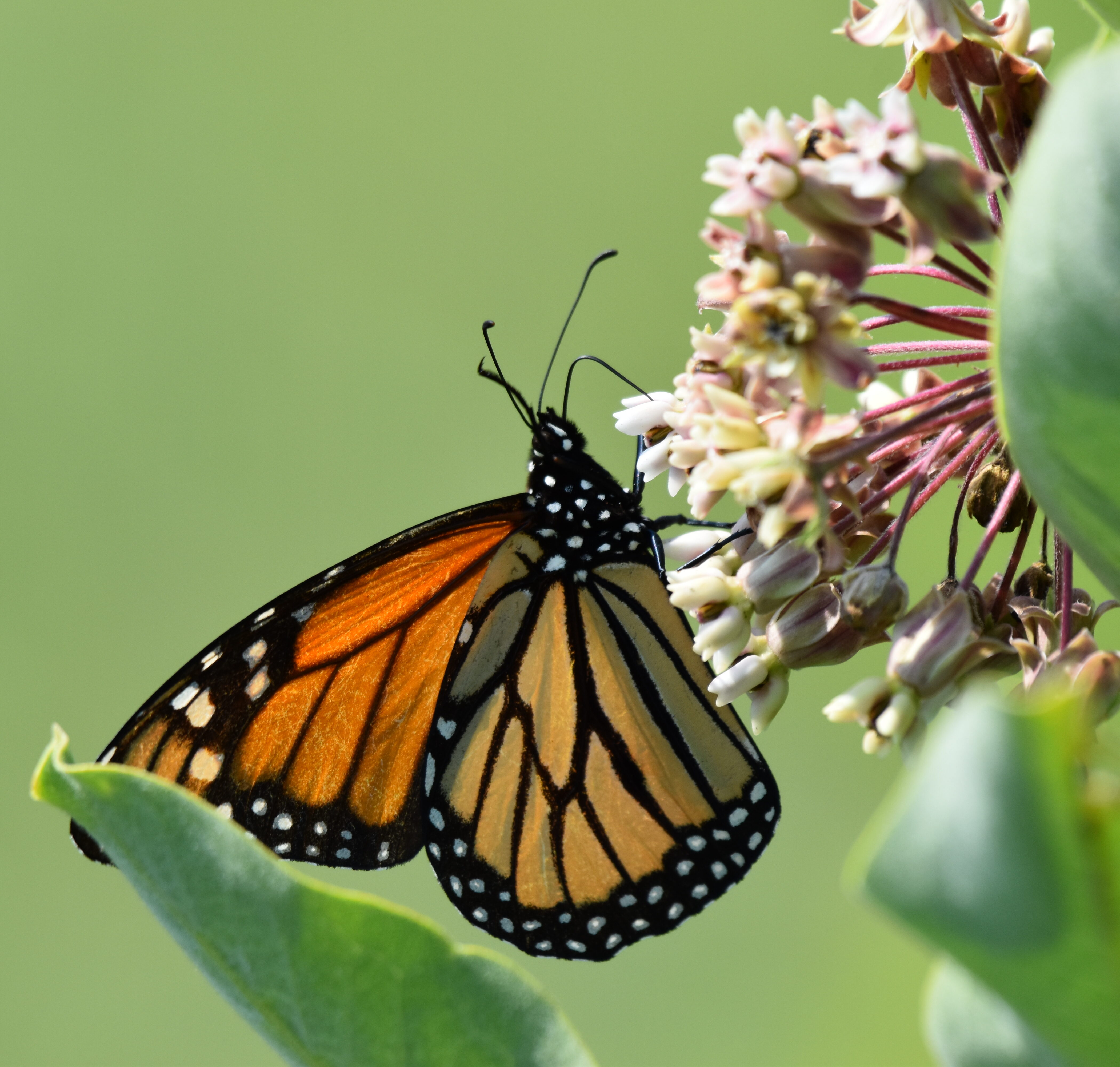 Pollinator Planting at Greenport