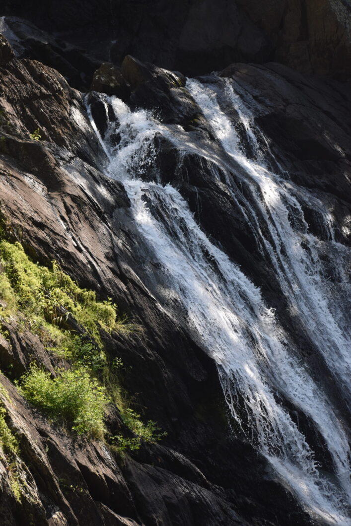 High Falls BioBlitz