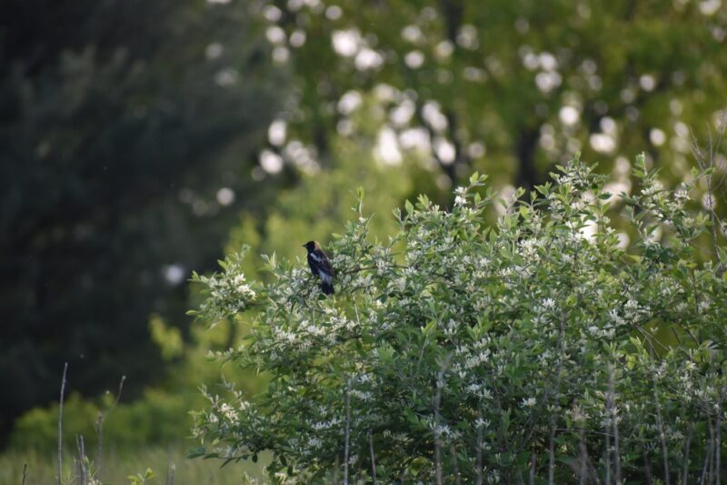 Spring Beginner Bird Walk
