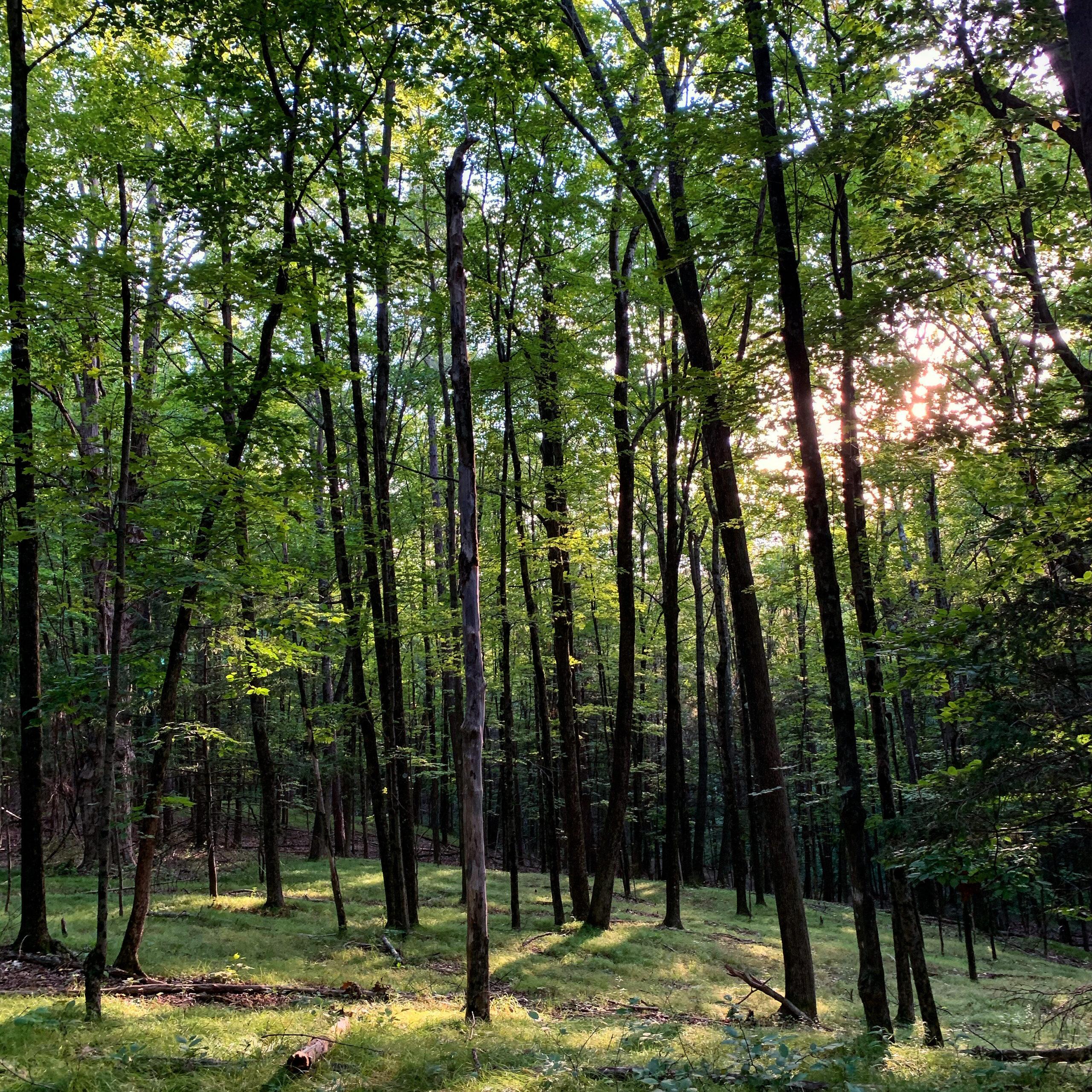 Hunting Season Begins October 1