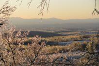 February Conservation Advisory Council Roundtable