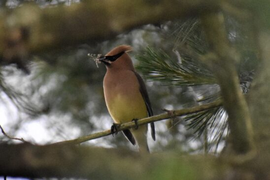 Beginning Birding with ADBC