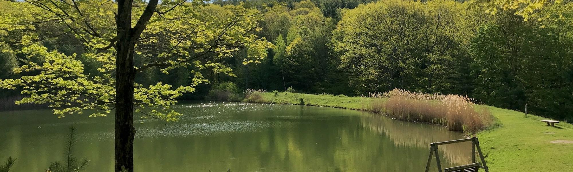 June_Archer_Jon's Pond_Schor Conservation Area